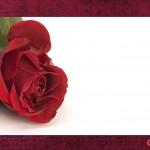 convite rosa-vermelha