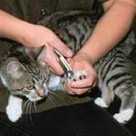 Como cortar unha de gato