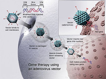 340px-Gene_therapy