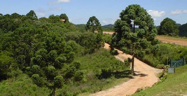 Monte Verde