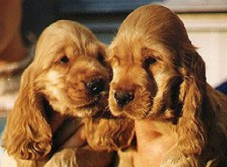 cachorros-foto