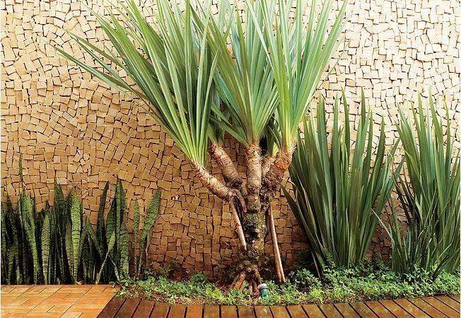 plantas jardim pequeno:DICAS DE COMO MONTAR UM JARDIM PEQUENO