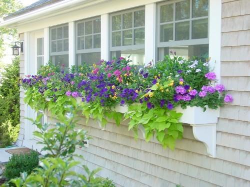 janela com flores 2