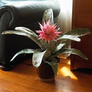 vaso de planta como cuidar