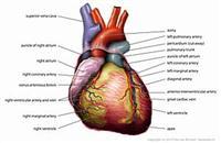 dia do cardiologista  homenage