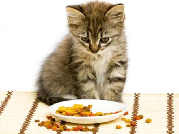 Dieta balanceada para gatos. (Foto: Divulgação).