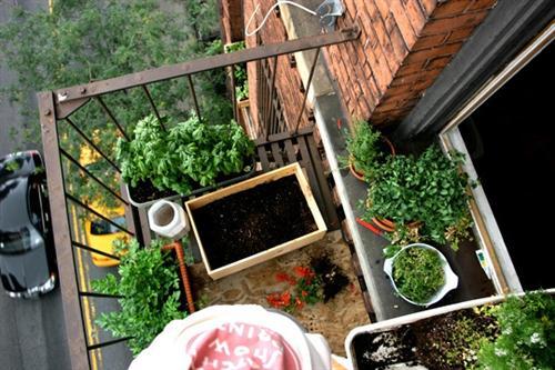 mini jardim apartamento:jardim apartamento janela e sacada