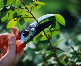 Curso de horticultura e outras qualificações