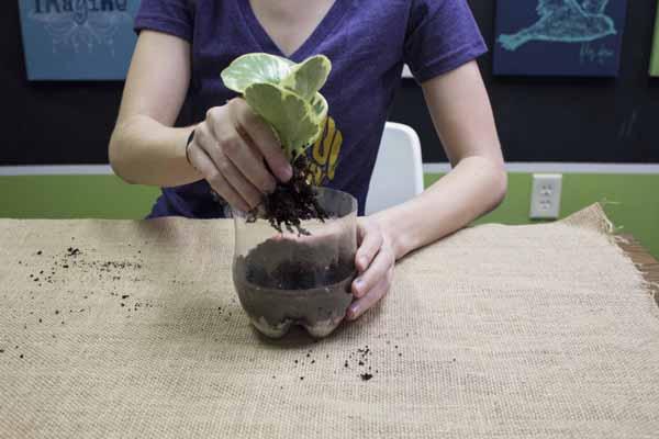 minijardim com plantas