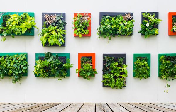 jardim vertical com quadrinhos