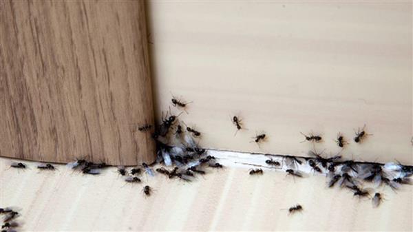 receita de inseticida caseiro para moscas