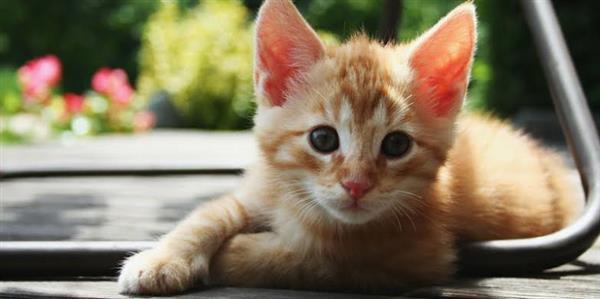 nomes para gatos
