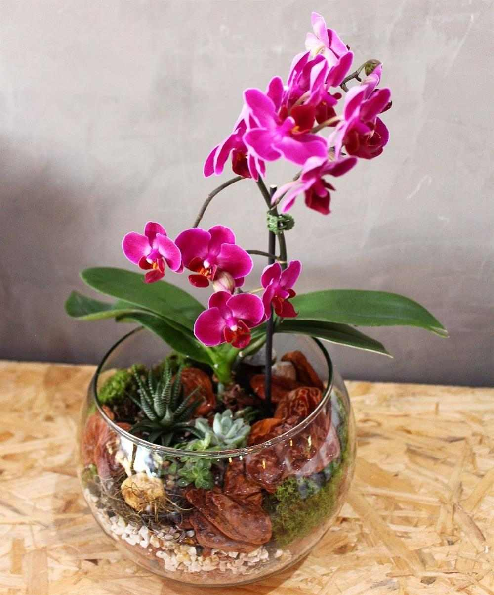 mini orquídea no vaso
