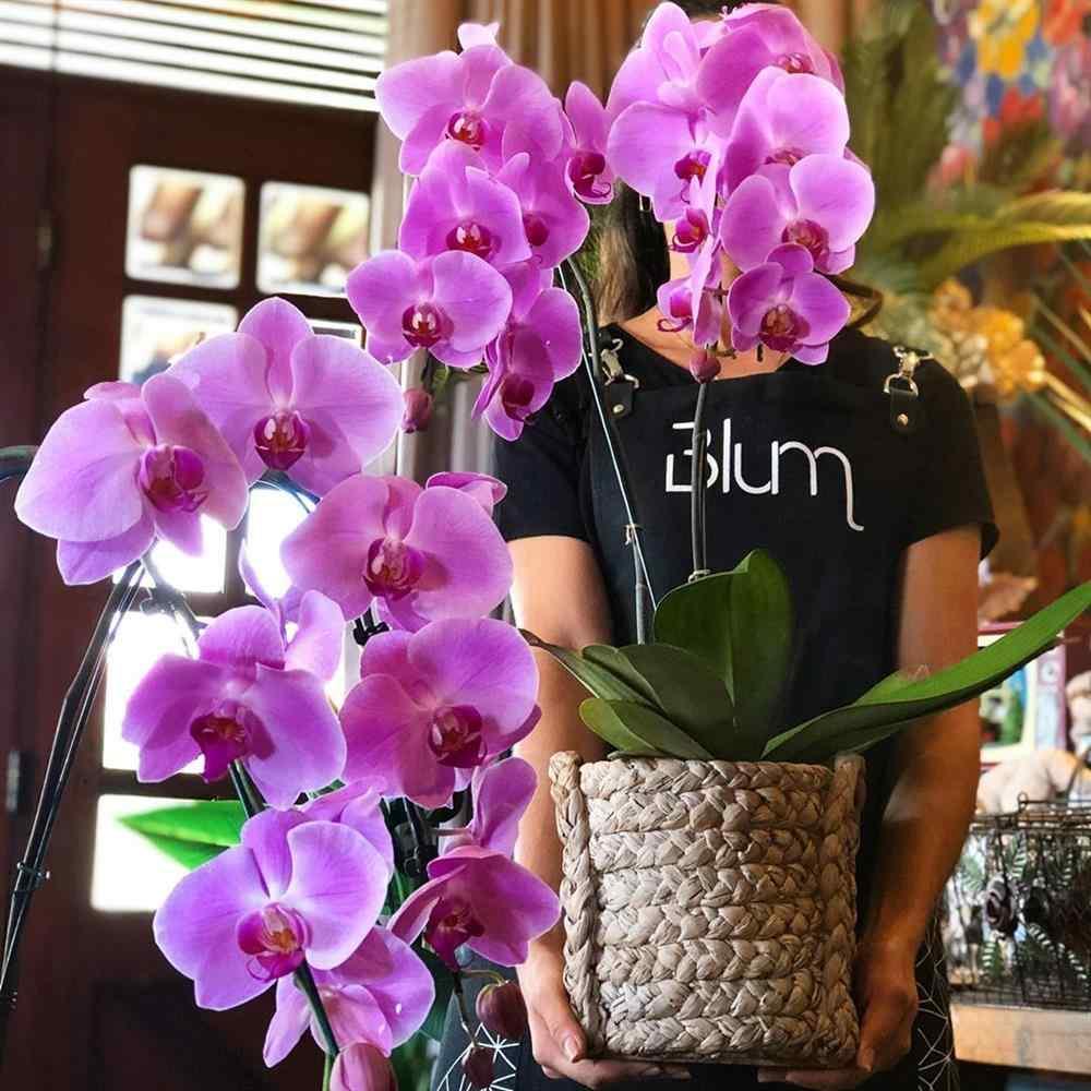 orquídea cascata