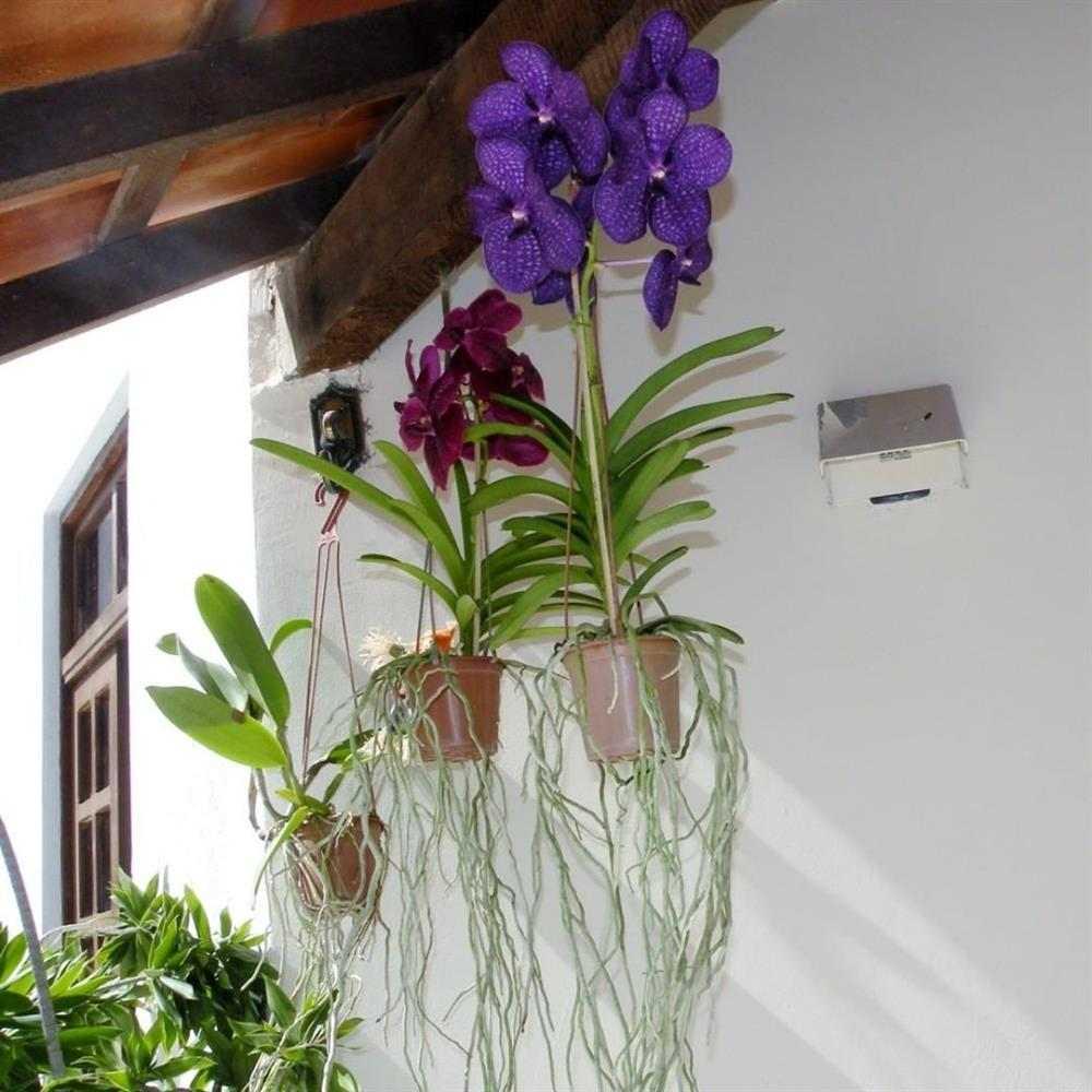 como cuidar de orquidea em vaso de barro
