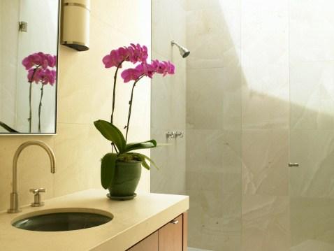 Decora o de banheiro com plantas fotos for Plantas hermosas para interiores