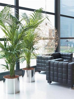 decora o de escrit rio com plantas. Black Bedroom Furniture Sets. Home Design Ideas