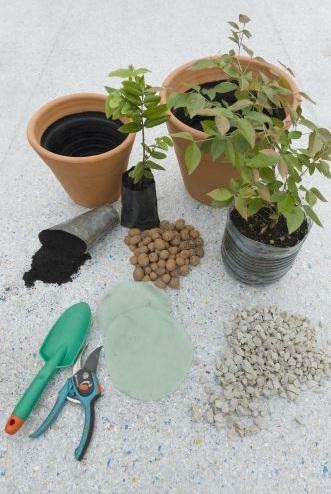 Com plantar as árvores em vasos pequenos (Foto:Divulgação).