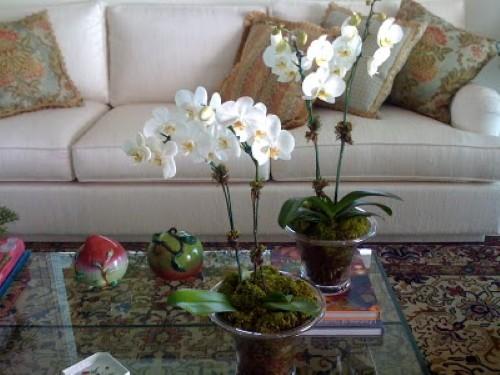 Flores em casa como usar (Foto:Divulgação)