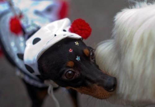 Dicas de fantasias para cachorro (Foto:Divulgação)