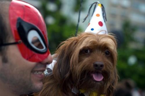 Carnaval de cachorro (Foto:Divulgação)