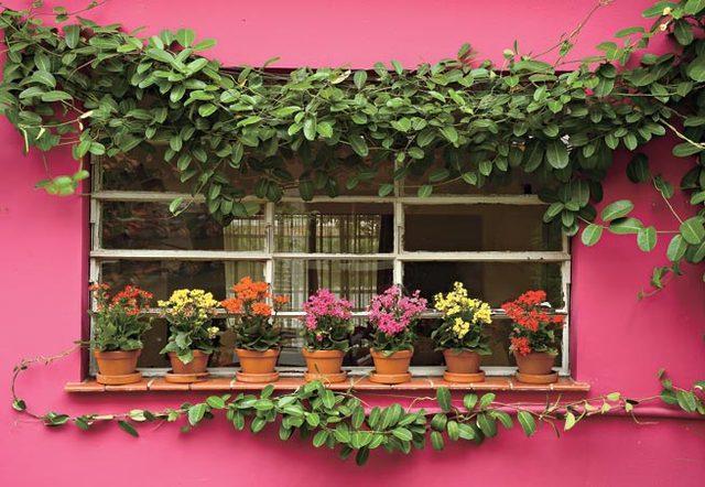Jardins em janelas. (Foto: Divulgação).