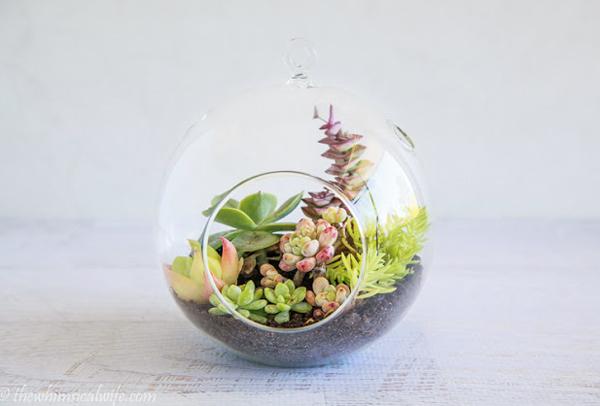 minijardim com aquario