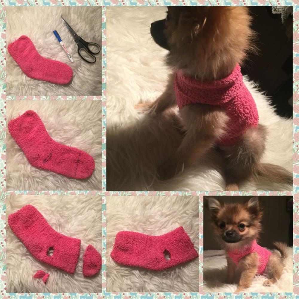 roupa para cachorro com meia