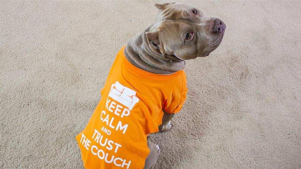 como fazer roupa para cachorro com camiseta