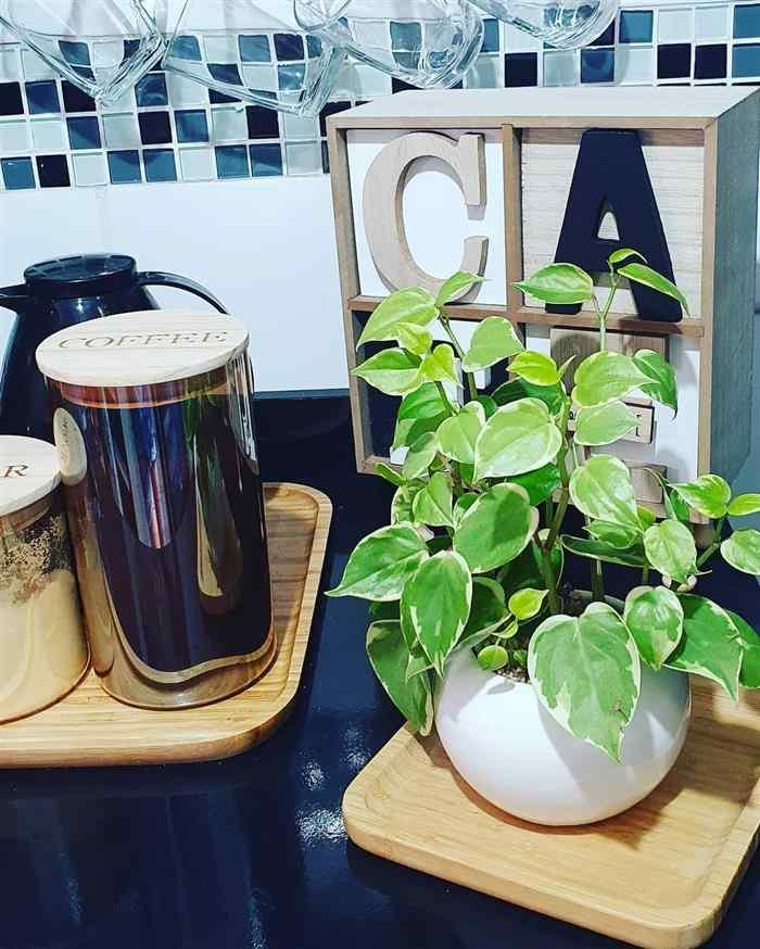 Dicas de plantas para cozinha