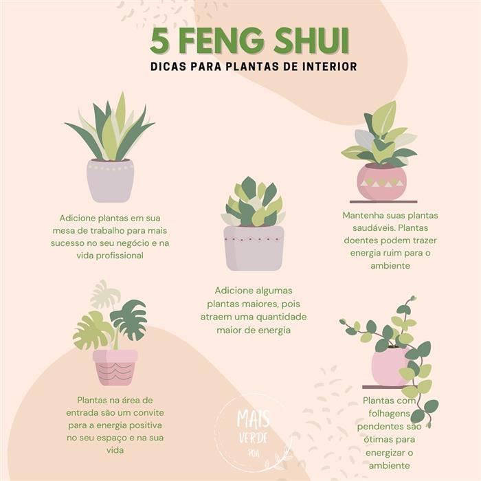 Feng shui e plantas para dentro de casa