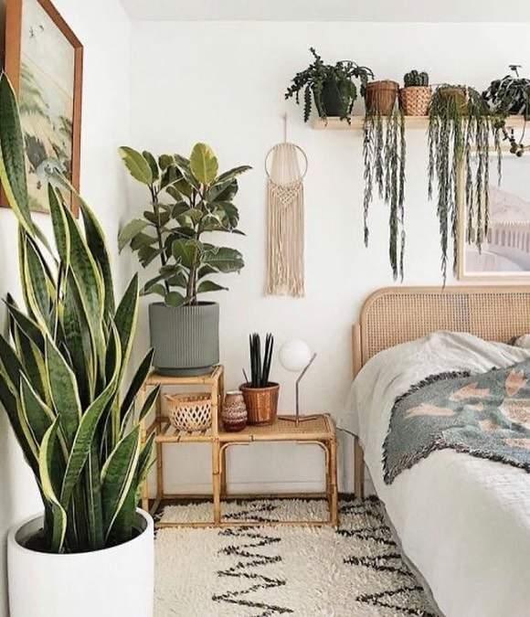 Melhores plantas para dentro do quarto
