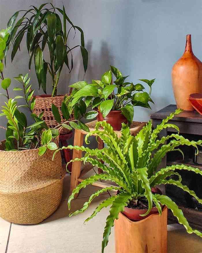 Nomes de plantas para dentro de casas