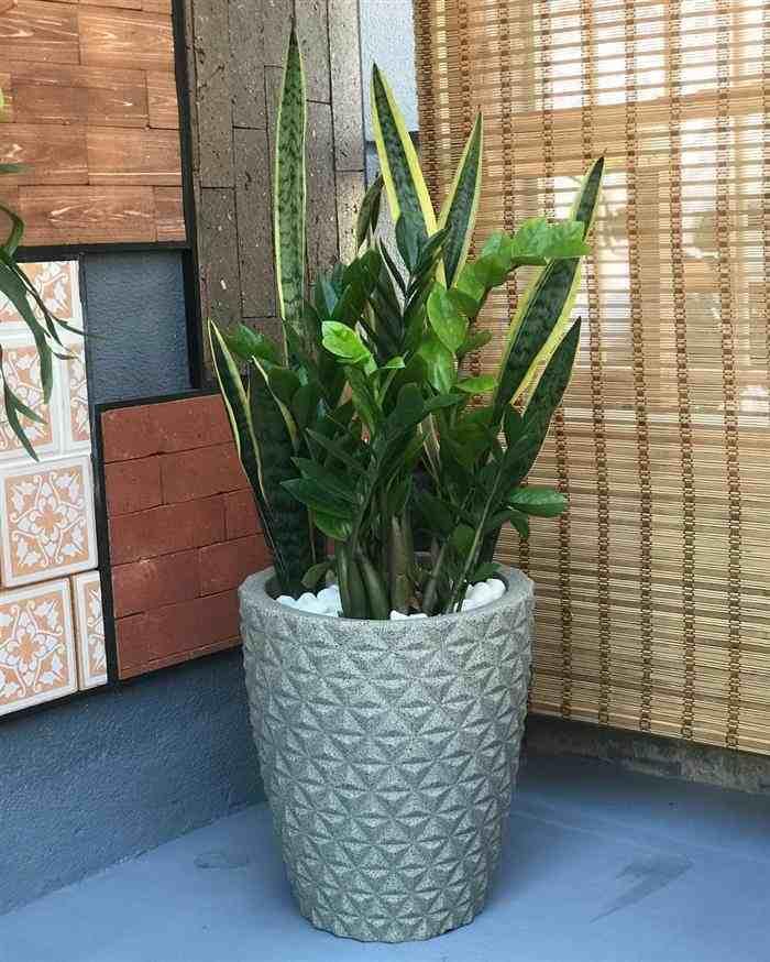 Plantas para deixar na sala