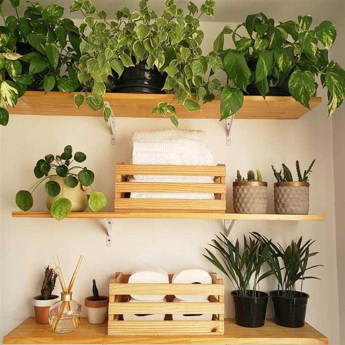Sugestões de plantas para deixar no banheiro